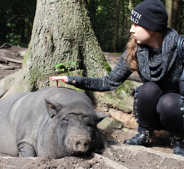 Hängebauchschwein Wildpark Schwarze Berge