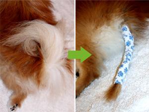 cuidados com a cauda de um cão paralizado
