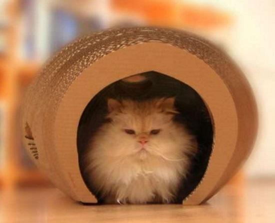 carton et chat 5