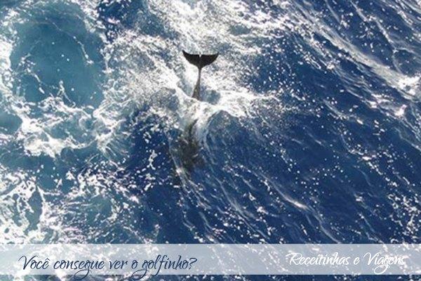 Diário de um cruzeiro pelo Atlantico: golfinhos e peixes voadores