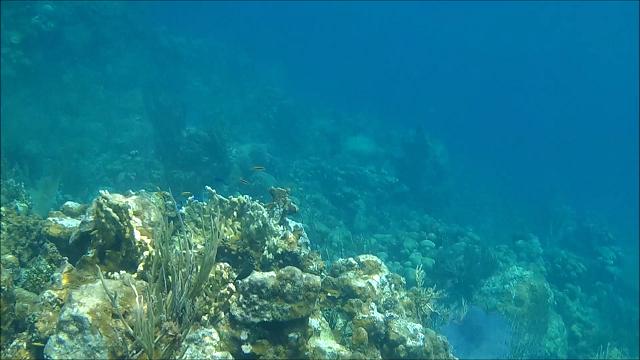 The coral reef was a veritable undersea garden