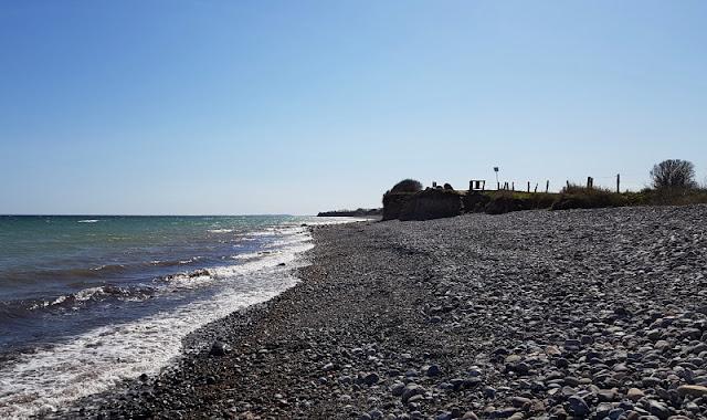 Küsten-Spaziergänge rund um Kiel, Teil 3: Raps, Steine und Meer bei Hohenfelde. Der Steinstrand an der Küste ist für Kinder und Familien spannend.