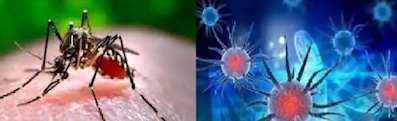 Corona. Vs  Dengue