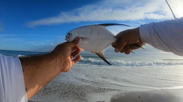 Florida, East Coast, Florida East Coast, Florida East Coast Surf Fishing, Florida Surf Fishing, Surf Fishing, Fishing Reports, Daytona Beach, Cocoa Beach, Fish Reports,