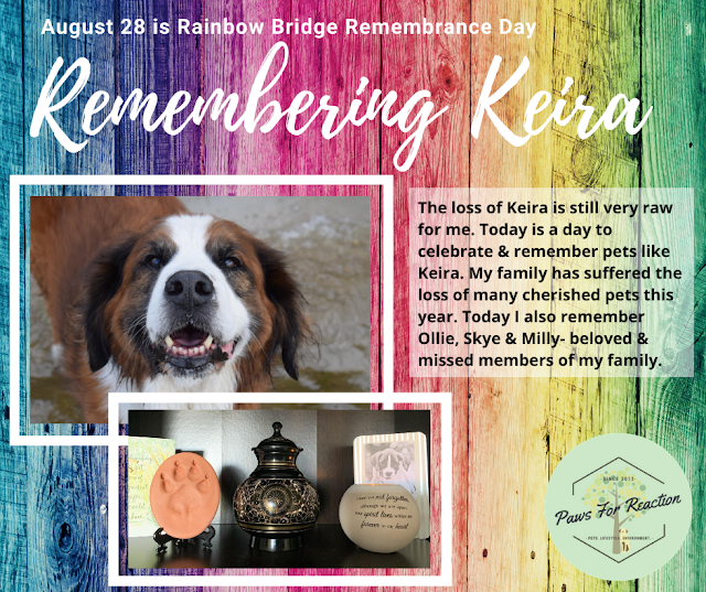 August 28 is Rainbow Bridge Remembrance Day
