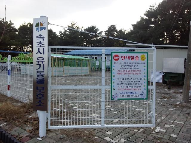 속초 유기동물보호소와 유기동물 입양센터