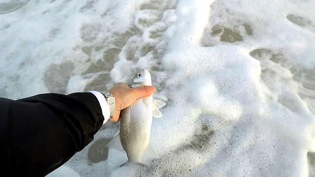SUELTA - Spinning de invierno desde playa 🌊🌊