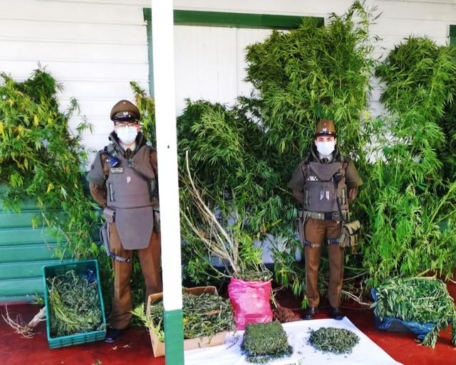 Carabineros decomisan mas de 8 kilos de marihuana en Río Bueno