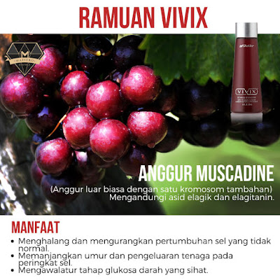 muscadine grape ramuan vivix