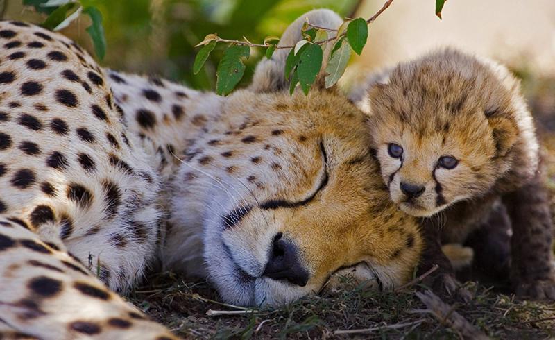 Amazing animal moms