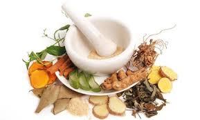 tanaman herbal obat kencing nanah alami