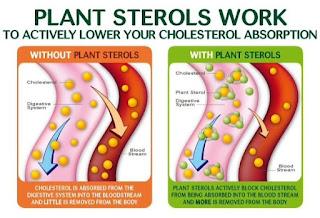bagaiman sterol dan stanol tumbuhan bekerja