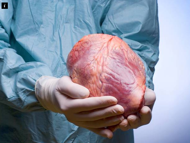 Doctors Brought A 'Dead Heart' Back To Life For The First Time. Wow!