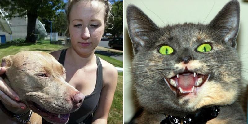 قطة واحدة تهاجم 7 كلاب