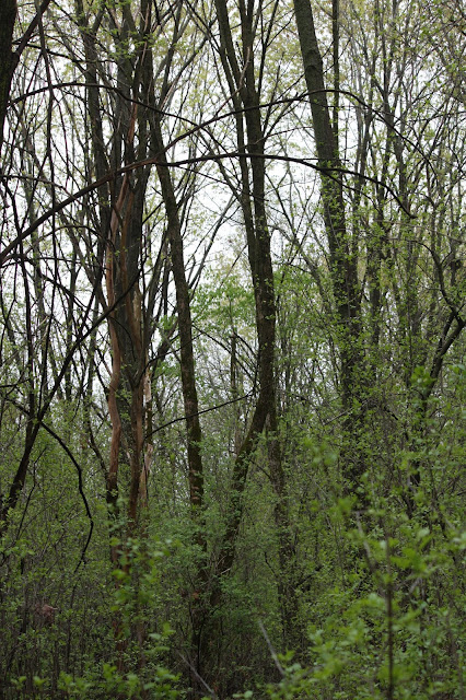 The forest at Penny Road Pond in Barrington, Illinois