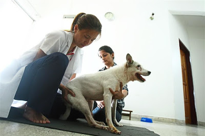 fisioterapia de cães