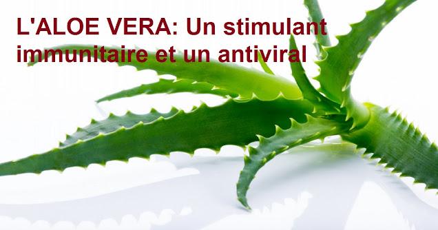L'ALOE VERA: Un stimulant immunitaire et un antiviral