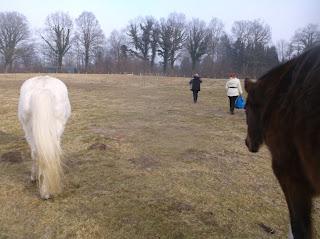 Pferde Unsere Stolzen Freunde Erinnerungen An Die Preetzer