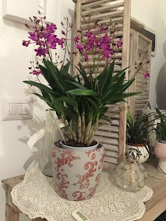 fioritura orchidea Dendrobium Berry Oda