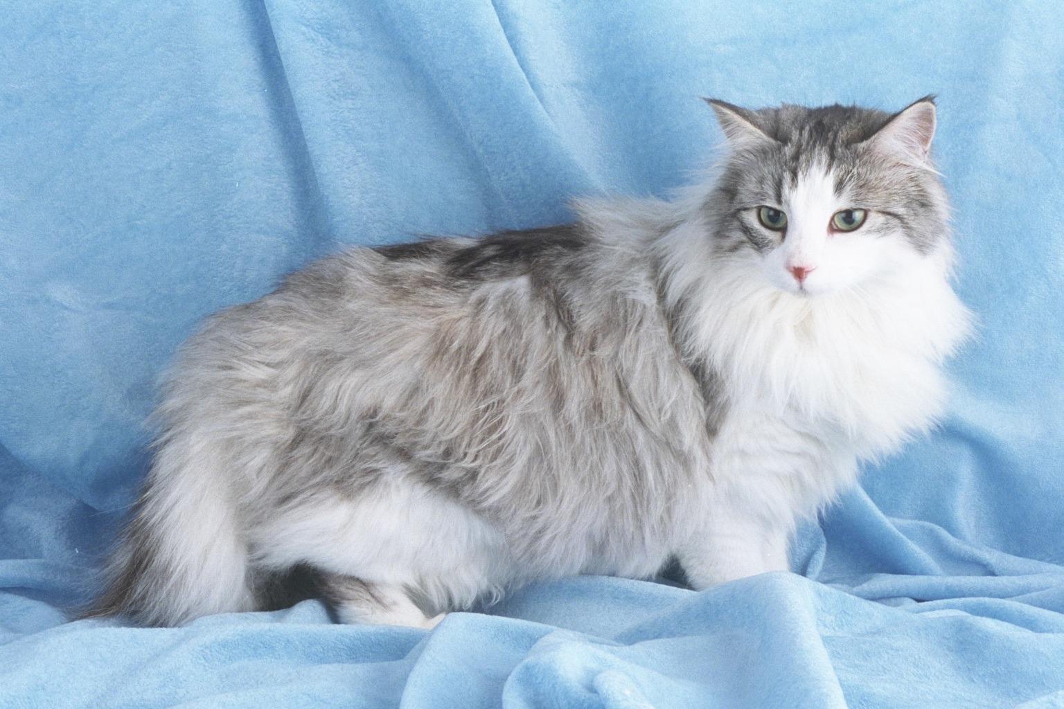 gato - photo #46