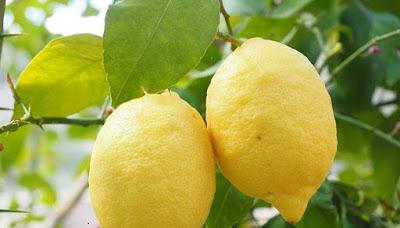 buah, lemon, buah lemon, manfaat lemon, khasiat lemon, manfaat buah, kesehatan, manfaat kesehatan, artikel kesehatan, nutrisi, gizi lemon, nutrisi lemon,