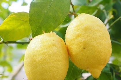 15 Manfaat jeruk lemon untuk kesehatan yang mengagumkan