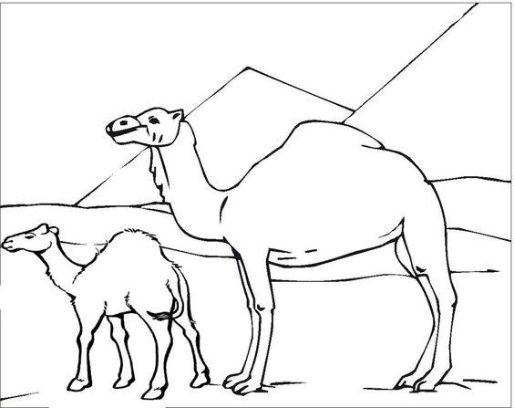 Tranh tô màu hai mẹ con lạc đà