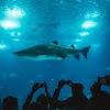 शार्क क्यों करती हैं इंसानों पर हमला ?  एक शार्क अटैक से कैसे बचे ॥  How to Survive a Shark Attack  ॥  Why Shark attack Human being ?