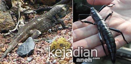 Hewan Punah yang Ditemukan 18 Hewan Punah yang Ditemukan Kembali