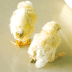 Waspadai Jenis dan Penyakit Yang Menyerang Ayam Ini