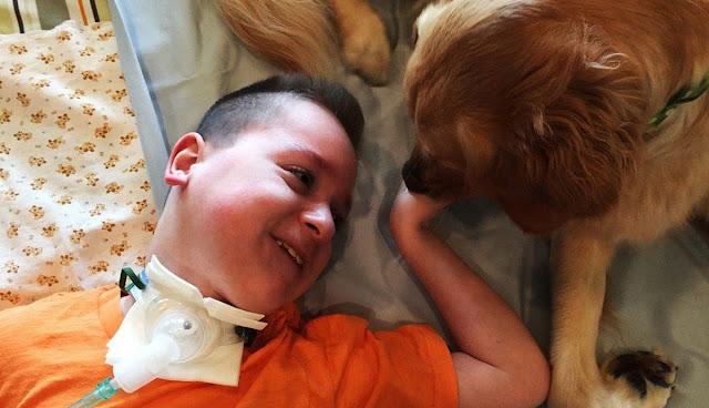 Эти двое нашли друг друга: 9-летний мальчик, который не может ходить, и золотистая Лекси
