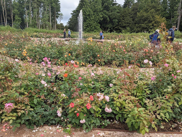 The Best Adventure Playground in the Lake District (Lowther Castle) - rose garden