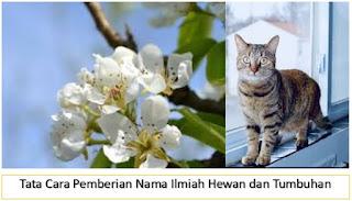 tata cara pemberian nama, taksonomi, hewan, tumbuhan, biologi