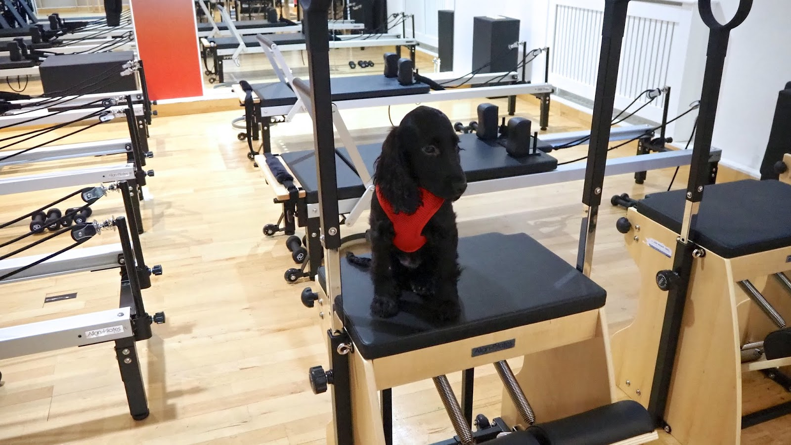 Flo the Pilates Pup at Pilates Circuit