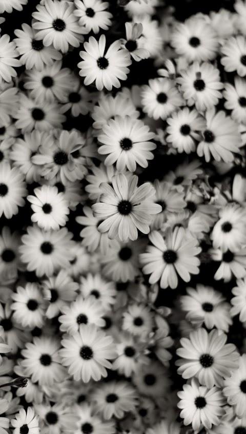 Bụi Hoa Màu Trắng