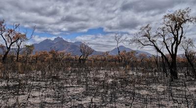 Image of landscape after fire
