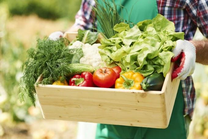Aprenda a fazer mudas com sementes dos vegetais que você consome