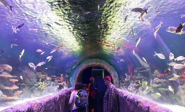 Best Aquariums in the USA: New York Aquarium