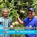 ปลูกมะม่วงพันธุ์อาร์ทู อีทู ต่างประเทศสั่งสัปดาห์ละ 5 ตัน