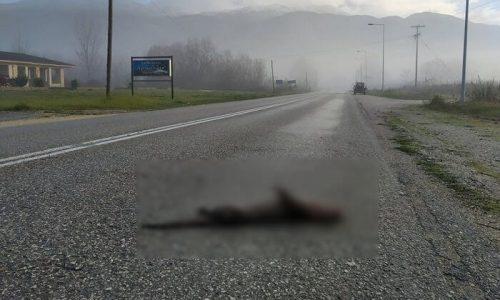 Ο Φορέας Διαχείρισης Λίμνης Παμβώτιδας Ιωαννίνων ενημερώθηκε για νεκρή βίδρα που εντοπίστηκε στο οδόστρωμα κοντά στο θηρόφραγμα στην περιοχή Περάματος.