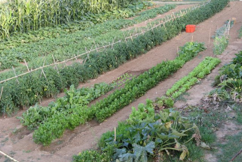 Όλα για τον κήπο: Σπορά φύτεμα καλλιέργεια λαχανικών