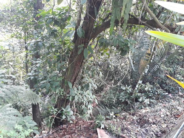 Human Adapt – Jalan-jalan ke Kebun Teh Kabawetan Kepahiang