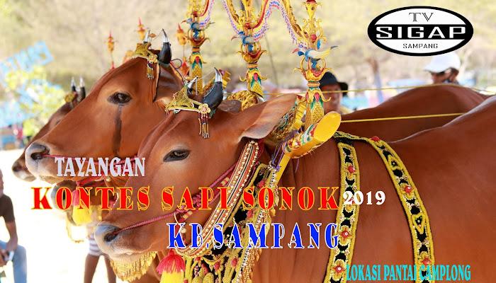Kontes SAPI SONOK pantai Camplong KB.SAMPANG 2019