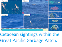 https://sciencythoughts.blogspot.com/2019/09/cetacean-sightings-within-great-pacific.html