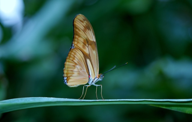 41++ Contoh hewan yang tidak mengalami metamorfosis yaitu a kupu kupu belalang terupdate