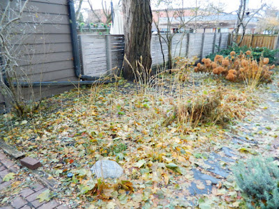 Toronto Cabbagetown Fall Backyard Garden Clean up by Paul Jung Gardening Services before