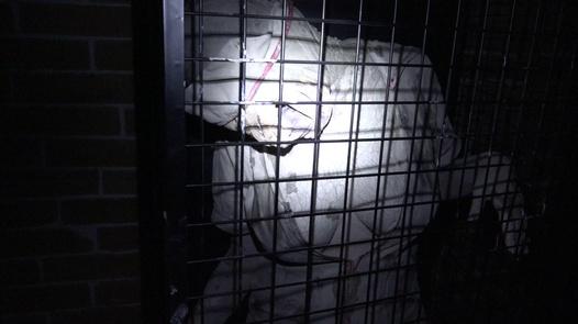 'Nurses From Hell': Las enfermeras de Silent Hill se quitan la ropa