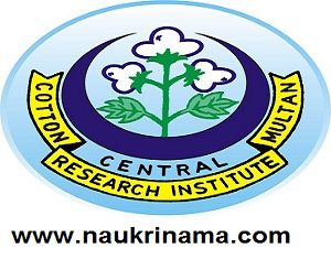 Central Institute for Cotton Research Recruitment for Young Professional