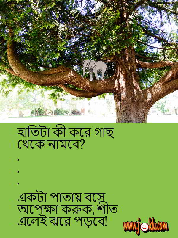 Elephant and tree Bengali short question answer joke
