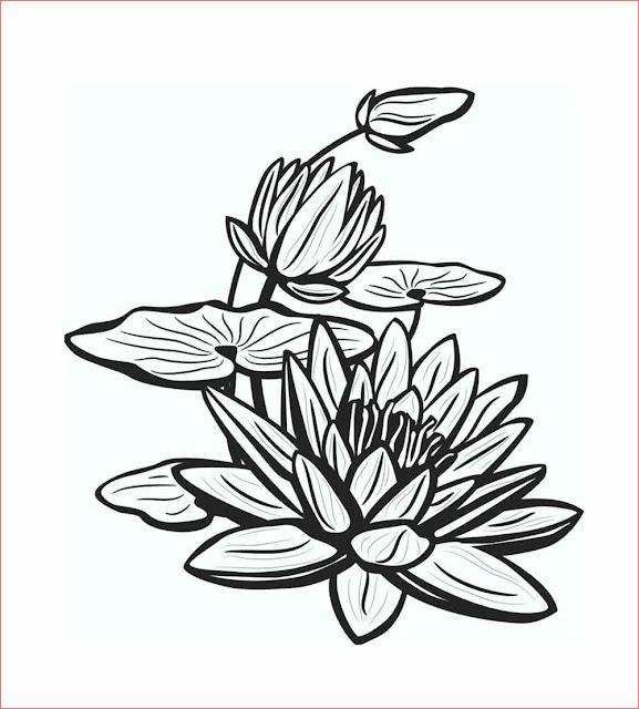 gambar-sketsa-bunga-teratai